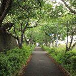 マンション前の歩道は緑に包まれています