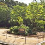 桜台公園。駅徒歩圏ですが、落ち着きもある閑静な立地。(周辺)